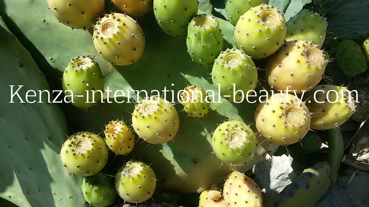 KENZA Pure Prickly Pear Seed Oil 1 oz - Best Seller