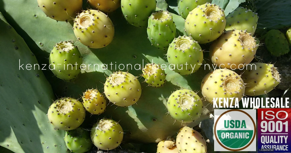 Organic Prickly Pear Seed Oil Wholesale 5 liters