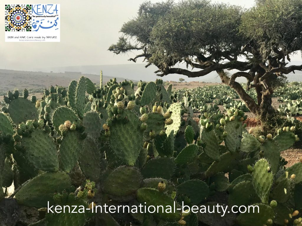 Prickly Pear Cactus and Argan Tree in Morocco