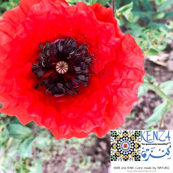 Red Poppy Flower Powder