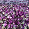 Dry Rose Buds - KENZA International Beauty